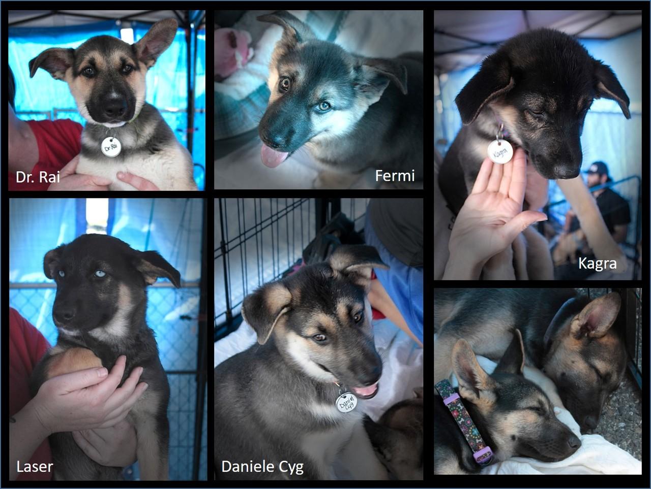 Bigger puppies collage 1